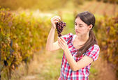 Woman looks the grapes in the vineyard — Stock Photo