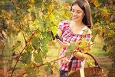 Smiling young woman in vineyard — Stock Photo