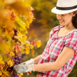 Smiling woman harvesting grapes — Stock Photo