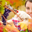 Woman working in vineyard — Stock Photo