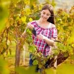 Grape picker in vineyard — Stock Photo #51553055