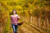 Kobieta przechodziła w rzędy winorośli — Zdjęcie stockowe
