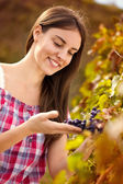 Winemaker observing grapes — Stock Photo