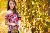 Vintner — Stock Photo