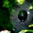 Spiders web — Stock Photo #12710325