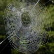 Spiders web — Stock Photo #12710353