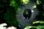 Spiders web — Stock Photo