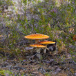 Toadstool — Stock Photo #13152719