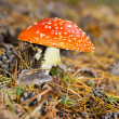 Toadstool — Stock Photo #13152755