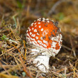 Toadstool — Stock Photo #13152806