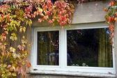 Golden sunny autumn — Stock Photo