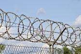 Barbed fence — Stock Photo