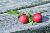 Wild plums — Stock Photo