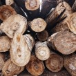 Logs — Stock Photo #23560765