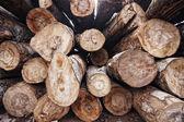 Logs — Zdjęcie stockowe