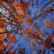 Foliage in the fall, view from below — Stock Photo #38894821