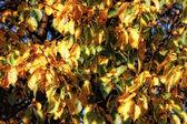 Folhas no outono — Fotografia Stock