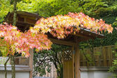 Fall Colors at Japanese Garden — Stock Photo