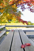 Fall Japanese Maple Leaves on Wood Bench — Stock Photo