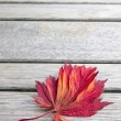 Red Japanese Maple Leaf on Wood Bench Background — Stock Photo