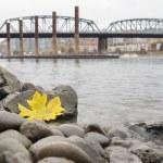 val seizoen langs portland willamette rivier door marina — Stockfoto
