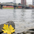 Stock Photo: Fall Season Along Willamette River Portland Oregon