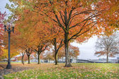 Maple Trees in Portland Downtown Park in Fall — Stock Photo