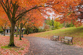 Walking and Biking Park Trails in Fall — Stock Photo