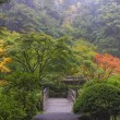 Foggy Morning in Japanese Garden — Stock Photo