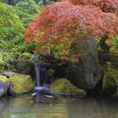 Red Maple Tree Over Waterfall Pond — Stock Photo