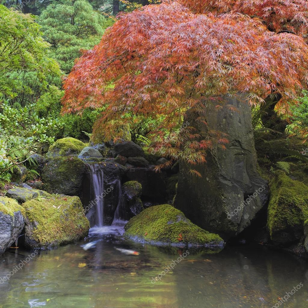 Arce rojo sobre estanque cascada foto de stock davidgn for Estanque cascada