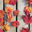 Japanese Maple Tree Leaves on Wood Deck — Stock Photo