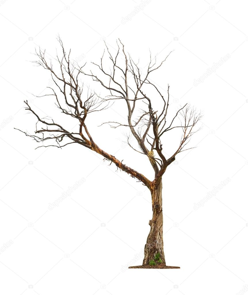black single women in dry branch Find tree branch stock images in hd and millions of other royalty-free stock  photos, illustrations, and vectors in the shutterstock collection thousands of new .
