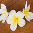 Stock Photo: Frangipani SpFlower