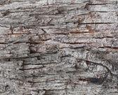 Old tree bark background — Stock Photo