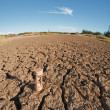 Stock Photo: Closeup of dry soil