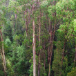 Stock Photo: Rainforest view