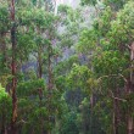 Rainforest view — Stock Photo #23982847