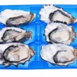 Stock Photo: Half dozen oysters