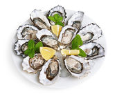 Dozen oysters on white plate — Stock Photo