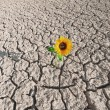 Dry soil and growing plant — Stock Photo