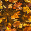 coloful fallen leaves on water — Stock Photo