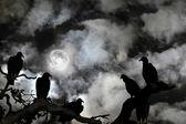 Buitres que se recorta contra un cielo tenebroso y luna llena — Foto de Stock