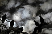 Vultures silhouetted against a full moon and spooky sky — Stockfoto