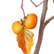 Ripe persimmons and leaf isolated against white - 图库照片
