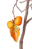 Ripe persimmons and leaf isolated against white — Stock Photo