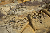 Pebble beach tafoni formations at Bean Hollow State Beach in Cal — Stock Photo