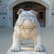 Bulldog statue at the Atherton Union building on the Butler Univ — Stock Photo
