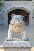 Bulldog statue at the Atherton Union building on the Butler Univ — Foto de Stock