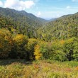 Early fall in Great Smoky Mountains National Park vertical — Stock Photo